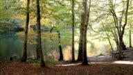 HD: Lakeside Picnic Area video
