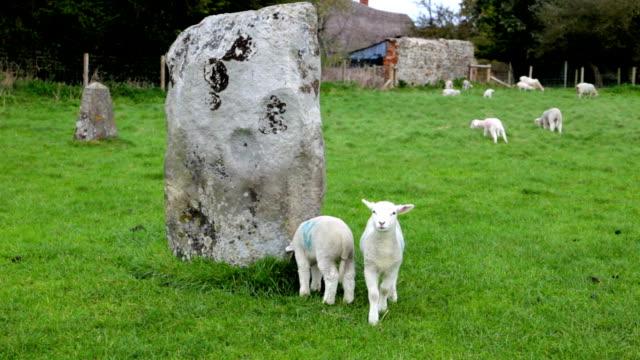 Lamb Bleating at Avebury Stone Circle video