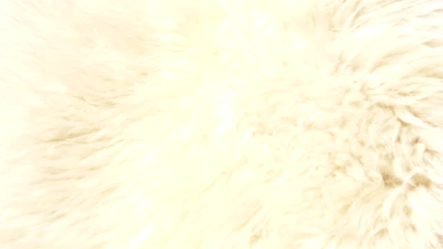 A lambskin or fur that is white in color GH4 4K UHD video