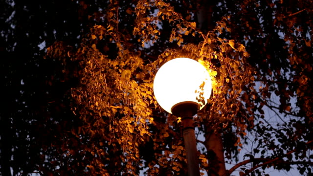 lamp inTrees in the park at night video