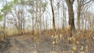 Land after burn video