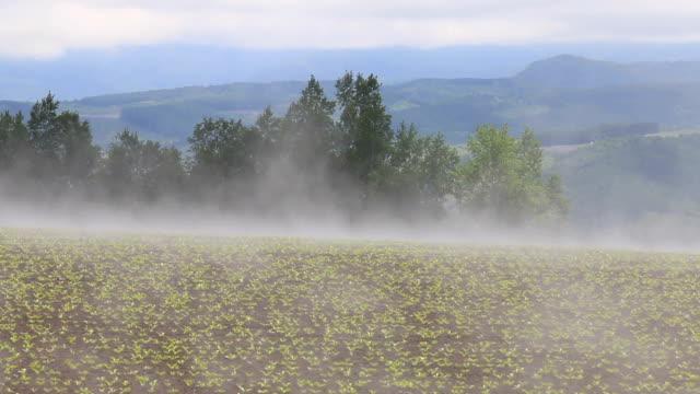 Land fog video