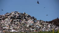 Landfill With Vultures Flying video