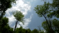 Landscape forest sky clouds late spring video