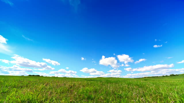 Landscape,  Green Meadow video