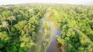 Landscape Jungle video