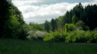 Landscape meadow and forest in spring. video