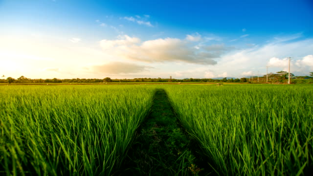 Landscape of a beautiful green field at sunset video