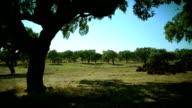 Landscape of a rural scene video