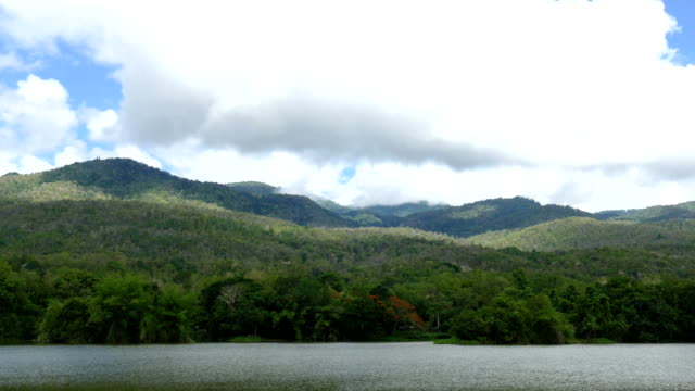 landscape of forest, lake and mountains in park in summer video