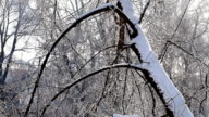 landscape of forest, snow-covered trees winter day video