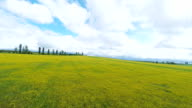 Landscape of green field under cloudy sky video