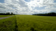 Landscape view of the barley field video