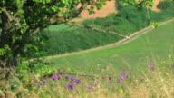 Landscape view video