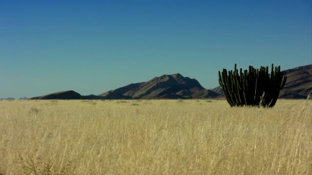 landscape with cactus video