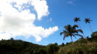 Landscape with coconut trees and mountains video