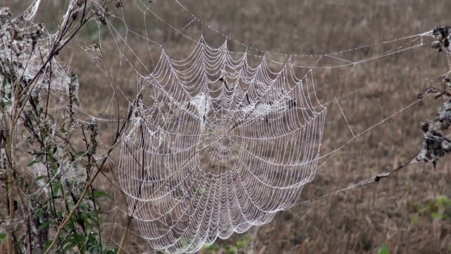 Landscape with dew covered cobweb video