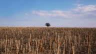 Landscape with dry field video