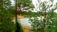 landscape with trees and lake video