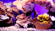 Landscape with tropical fishes and corals. video