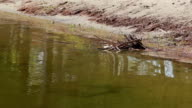 Large amount of trash polluting our waters video