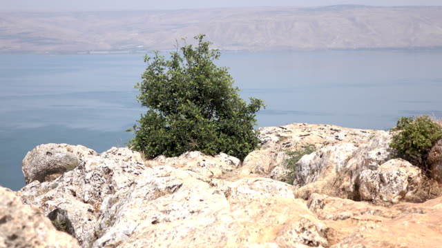 Large Bush Standing in Front of Sea of Galilee video