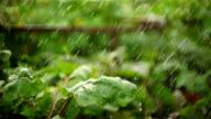 large drops of rain falling on plants video