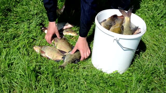large fish bucket video
