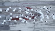 Large flock of birds Sea gulls landed on the wharf harbour video