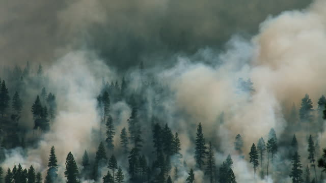 Large forest fire climbing up mountain in Montana video