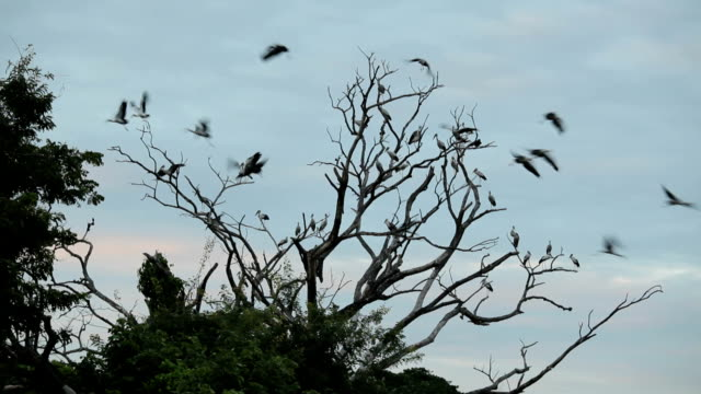 Large group of birds and tree in the sky video