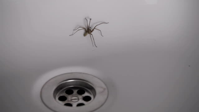 Large House Spider Stuck In A Bathtub video