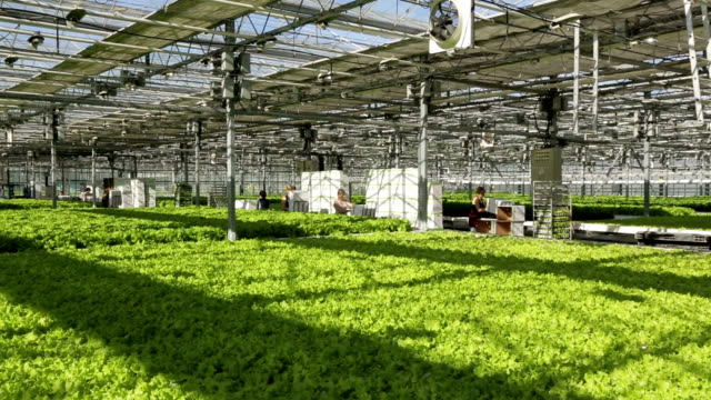 Large industrial greenhouses, green beds, people are working in the background video