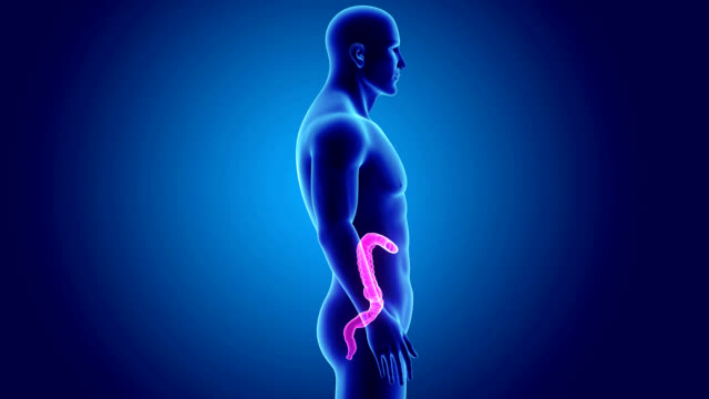Large intestine with Body video