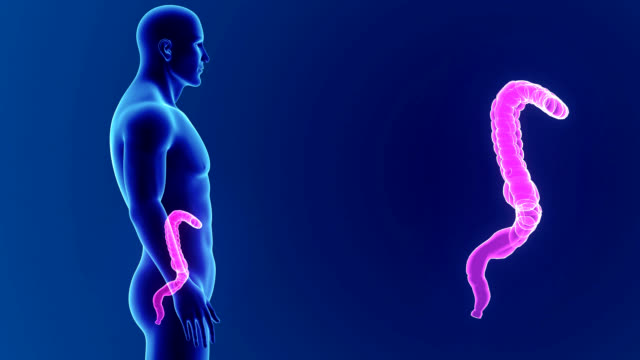 Large intestine zoom with Body video