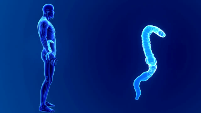 Large intestine zoom with Skeleton video