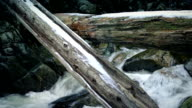Large Logs Over River In Snowy Wilderness video