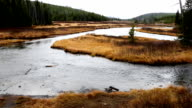Large Mountain River in Forest With Fall Colors video