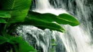 Large Plant By Jungle Waterfall video