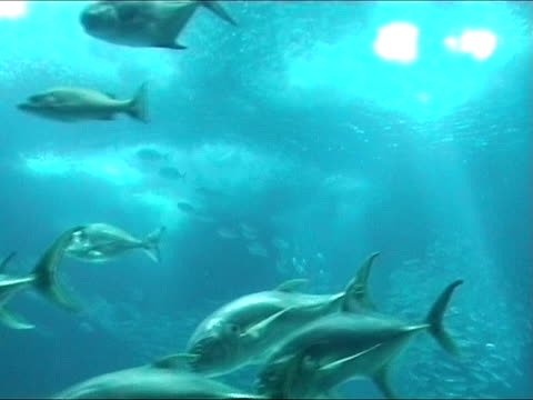 Large Shoal of fish video