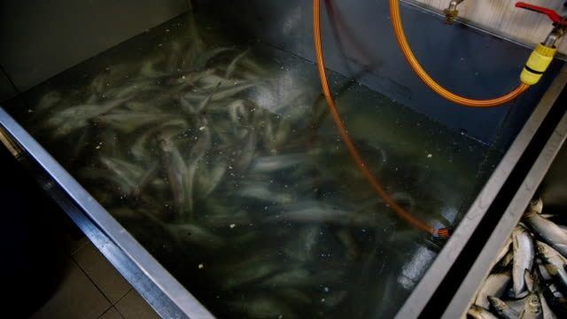 A large tank with fish herring in the fish factory video