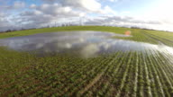 Large water puddle on young green wheat field in early spring, time lapse video