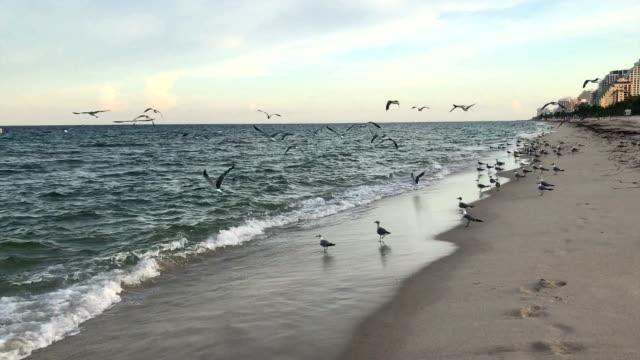 Las Olas Beach video