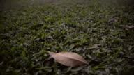 HD : Last Leaf in park video