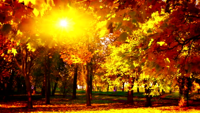 Last sun in autumn a park. video