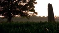 Late evening wheatfield, HD video