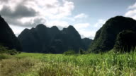 Late Summer sugarcane Field with mountain and flowing cloud as background Timelapse video
