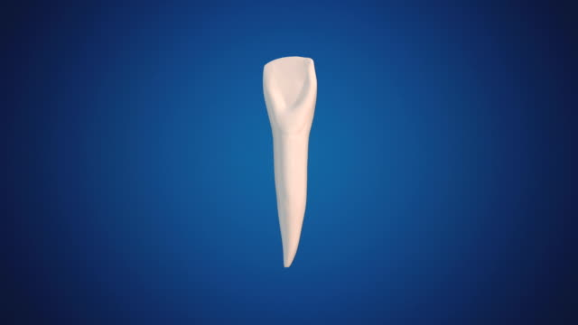 Lateral Incisor video