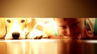 Laughing little boy with best friend beagle dog under bed video