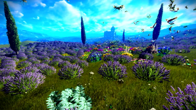 Lavender fields video